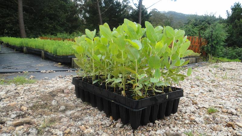 Vifober vivero forestal berganti os viveros en arteixo for Preparacion de sustrato para viveros forestales